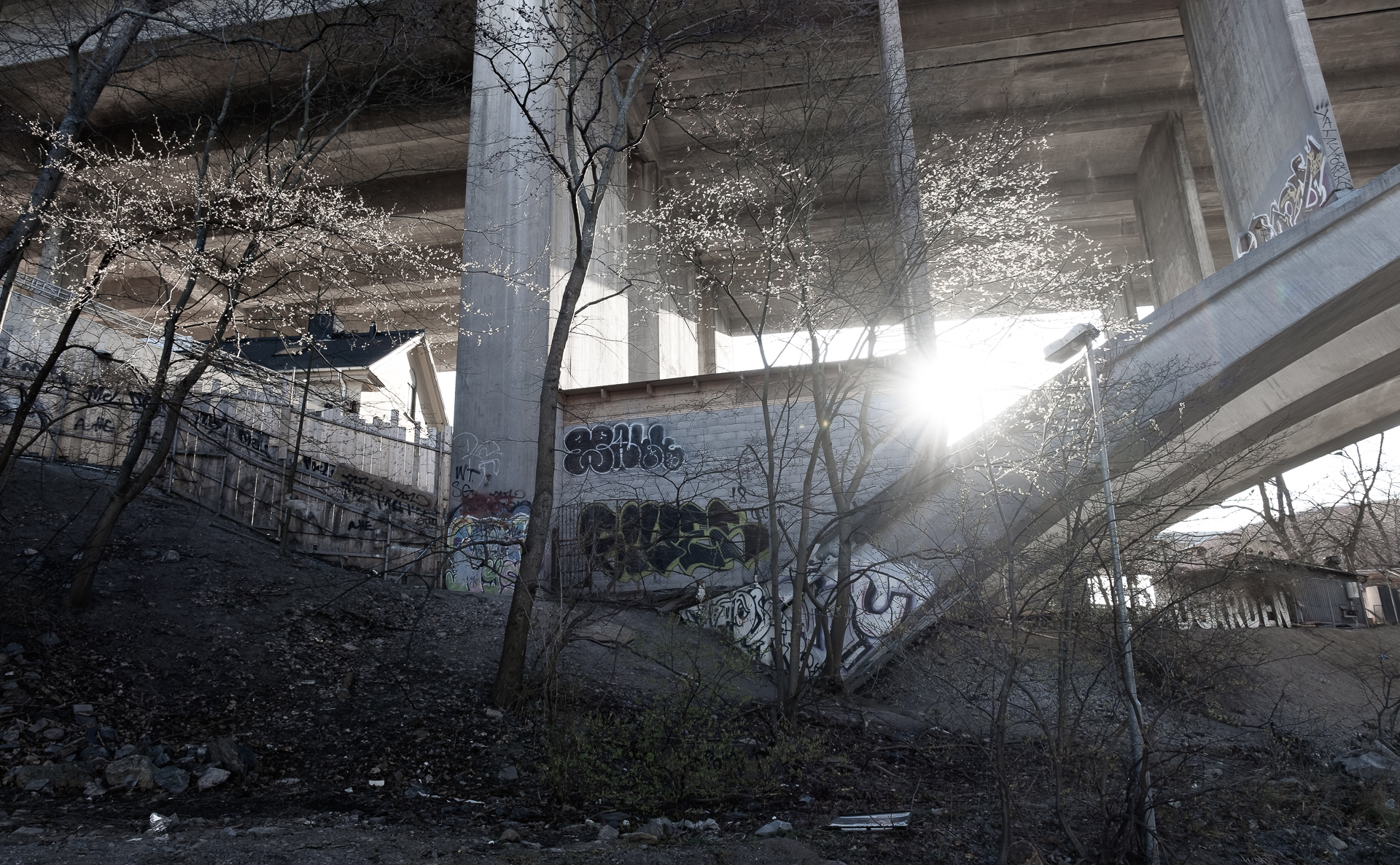 Trees under a bridge